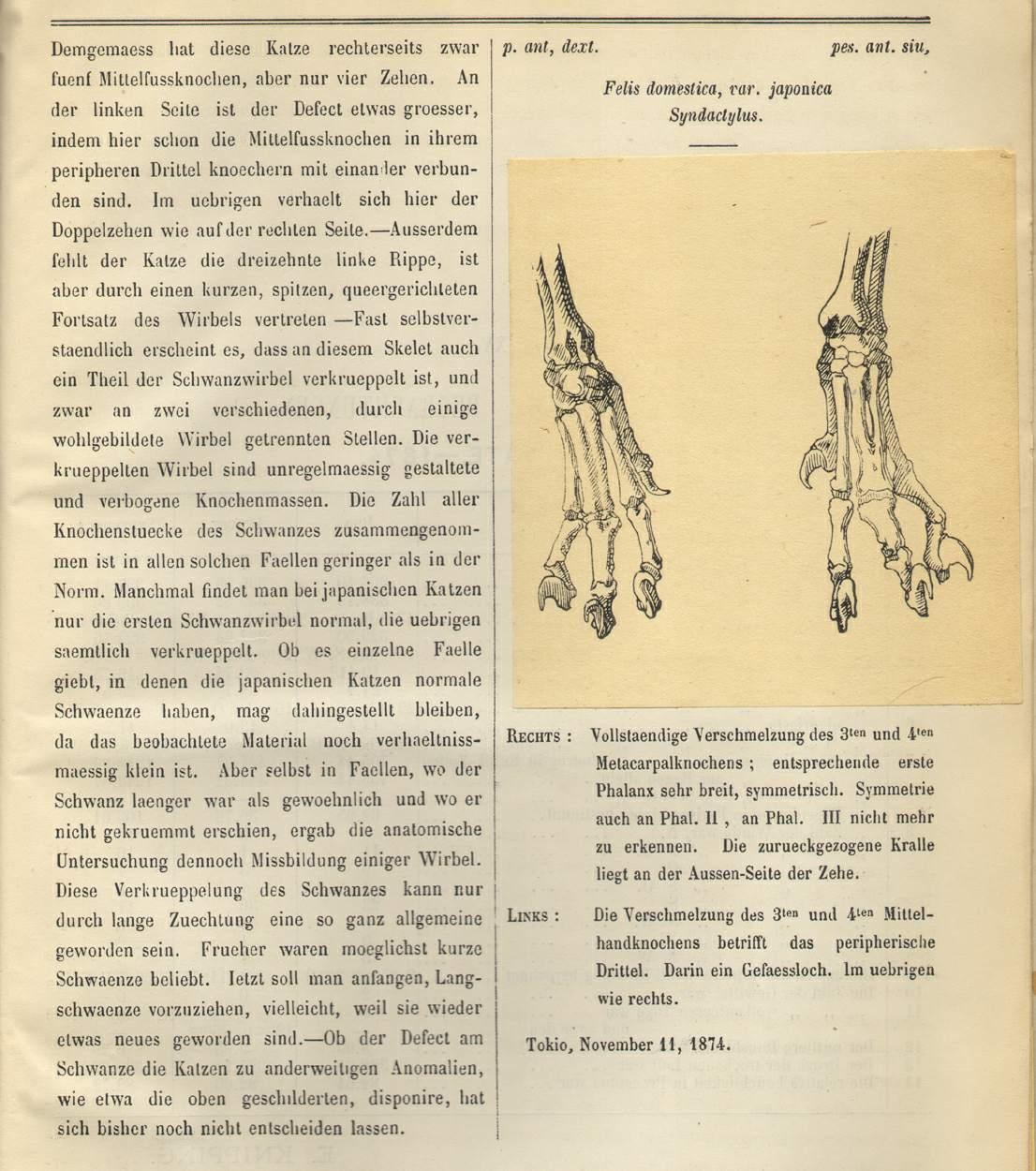 Book 1873080618, Mittheilungen der Deutschen Gesellschaft fur Natur ...